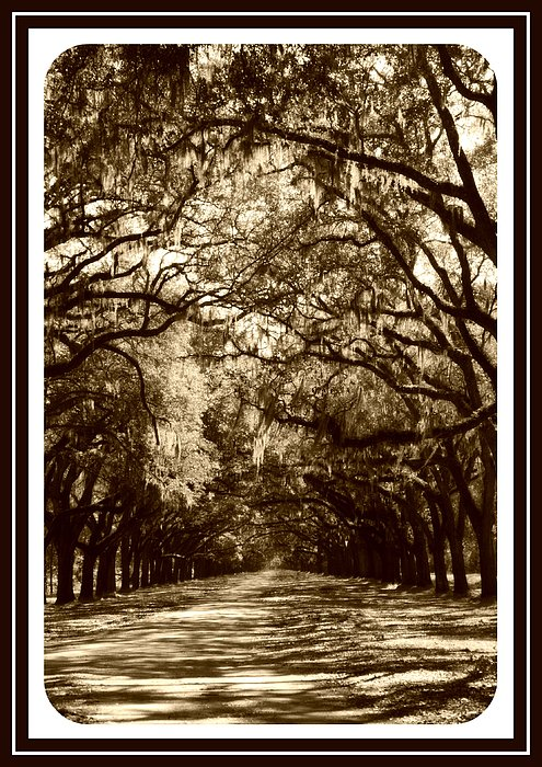 Southern Welcome In Sepia Print by Carol Groenen