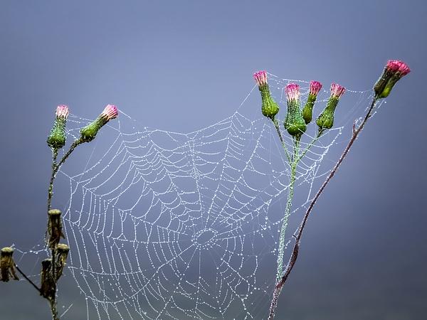Zina Stromberg - Spider web