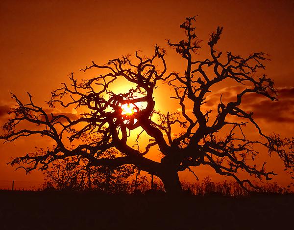 Spooky Tree Print by Stephen Anderson