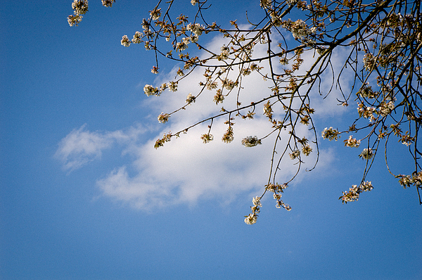 Spring Cloud Print by Andy Smy