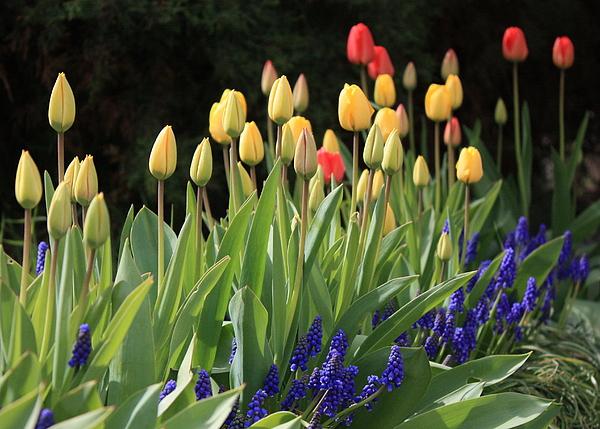 Spring Garden Print by Carol Groenen