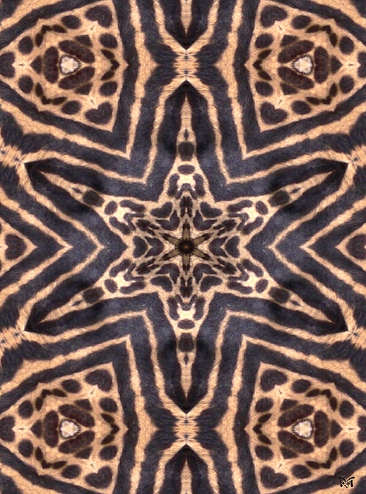 Star Of Cheetah Print by Maria Watt