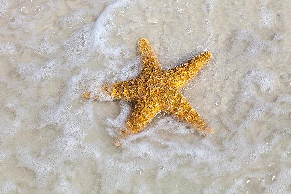 Starfish Print by Janet Fikar