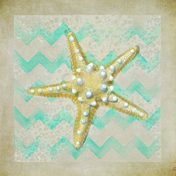 Sandi OReilly - Starfish In Modern Waves