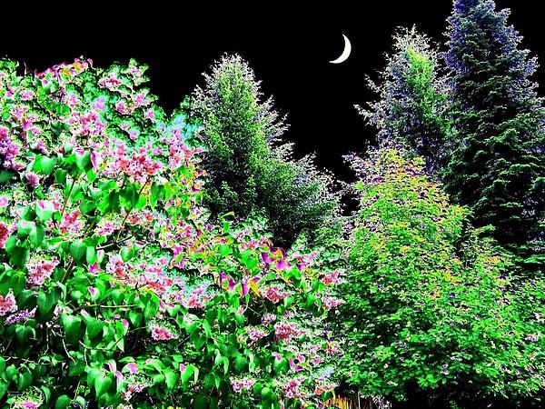 Still Of The Night Print by Will Borden