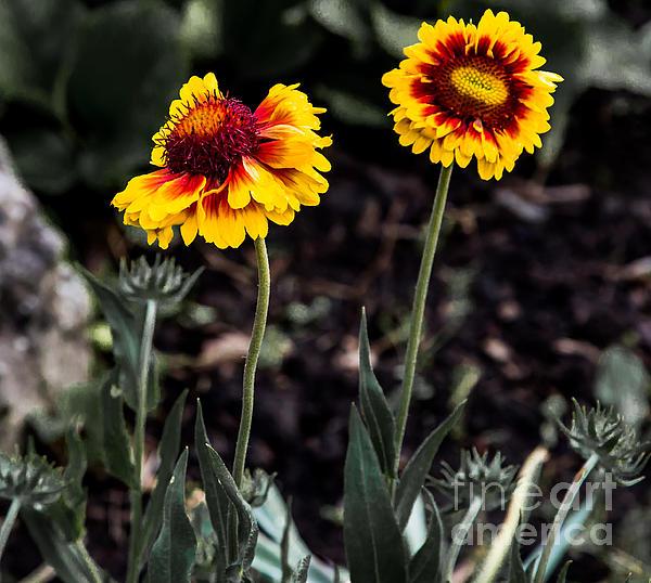 Olga Photography - Summer Beauty