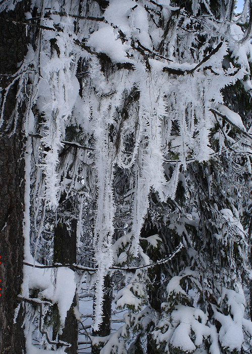 Sumpter Winter Print by Caprice Scott