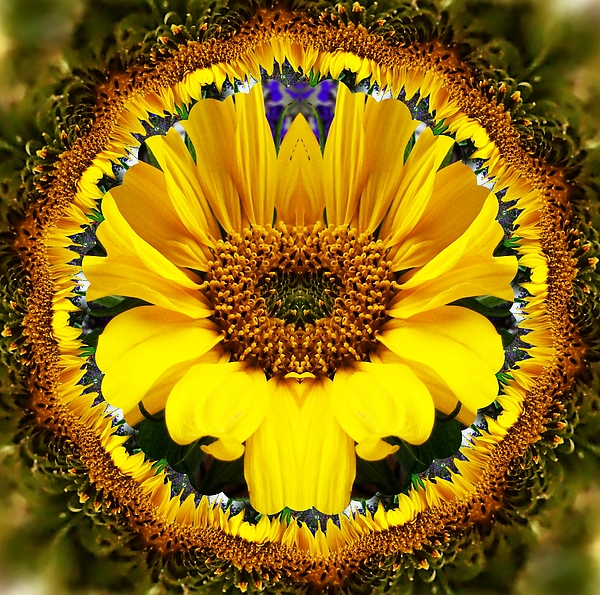 Nancy Pauling - Sunflower Roundel