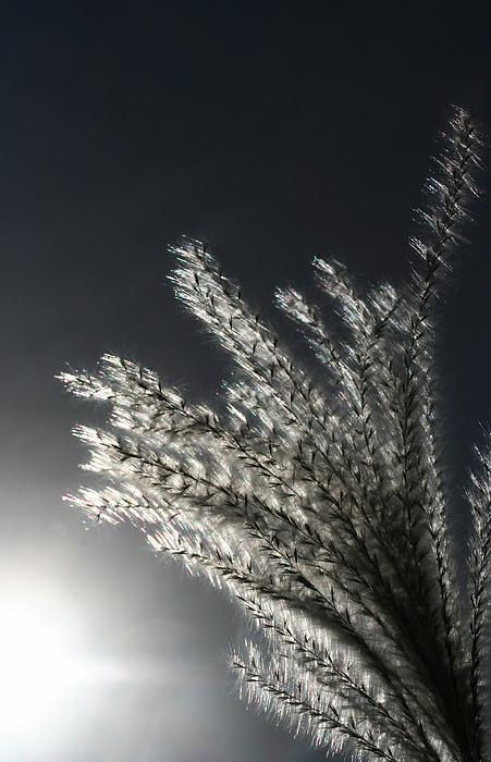 Sunlight Grass Print by Steve Augustin