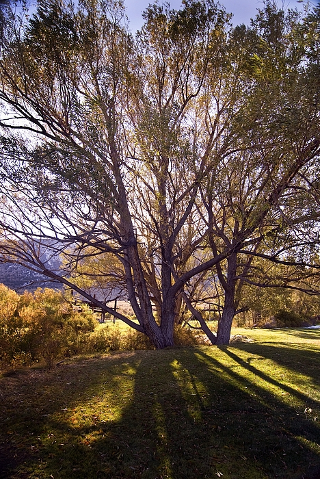 Sunny Mono Tree Print by Norman  Andrus