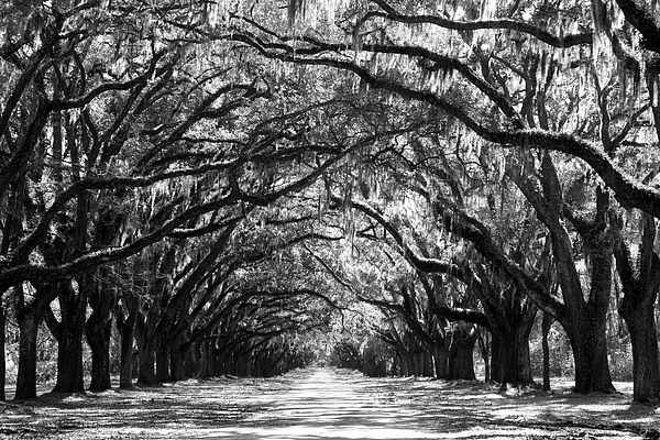 Sunny Southern Day - Black And White Print by Carol Groenen