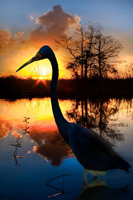 Sunset Silhouette Print by Debra and Dave Vanderlaan