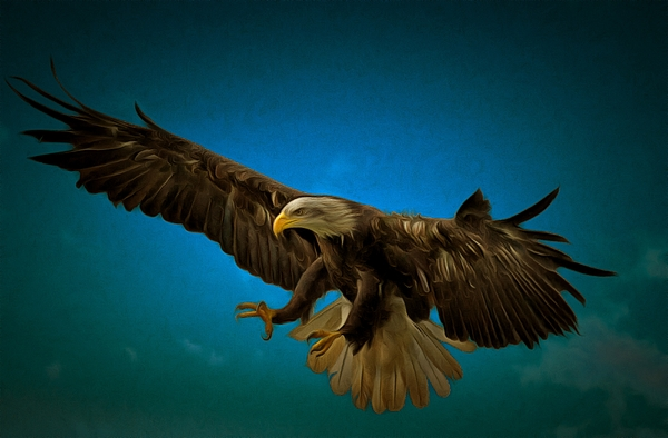 Scott Carruthers - Swooping Eagle