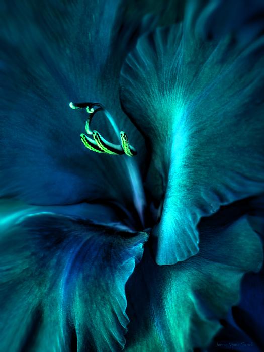 Teal Gladiola Flower Print by Jennie Marie Schell