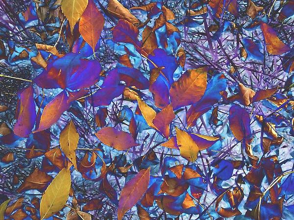 Textured Blue Print by Beth Akerman