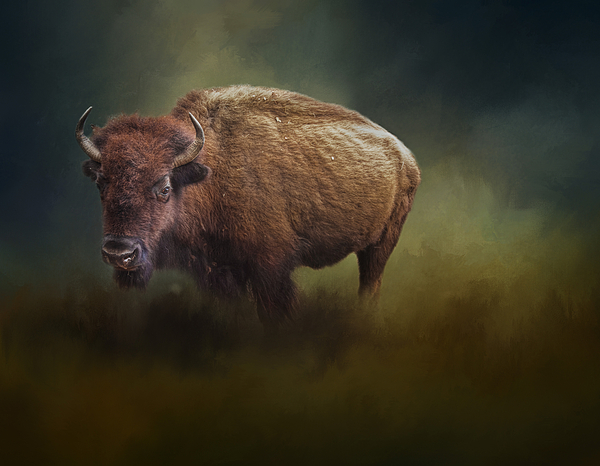David and Carol Kelly - The American Bison