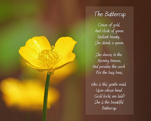 The Beautiful Buttercup Poem Print by Tracie Kaska