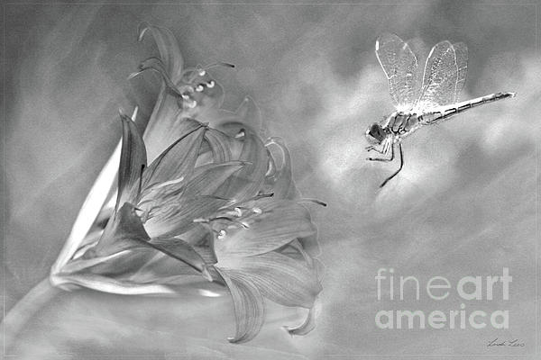 The Dragonfly And The Flower Print by Linda Lees