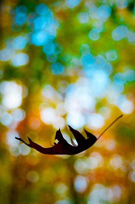 The Fall Print by Ryan Heffron