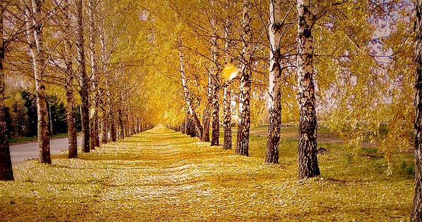 Lana Art - The Golden Birch Alley