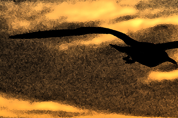 The Gull Print by William Jones