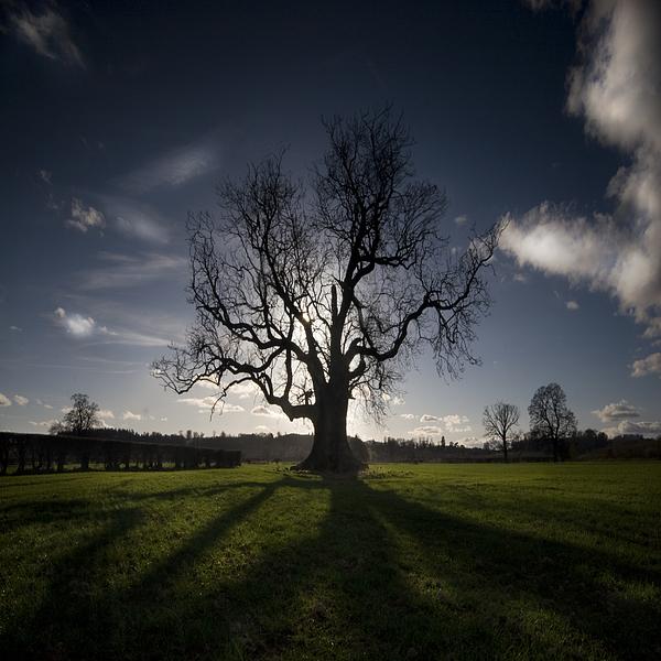 The Lonely Tree Print by Angel  Tarantella