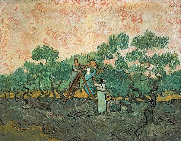 The Olive Pickers Print by Vincent van Gogh