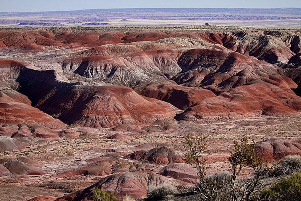The Painted Desert  8062 Print by James BO  Insogna