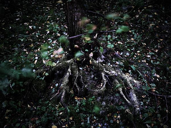 Jouko Lehto - The Roots
