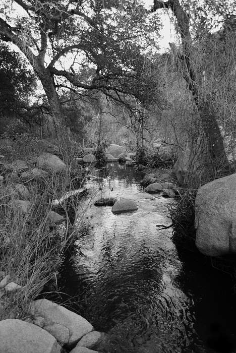 The Stream Print by Bransen Devey