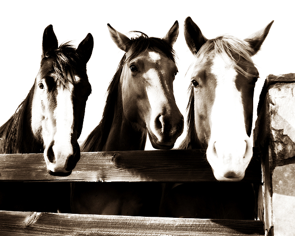 The Three Amigos In Sepia Print by Steve Shockley