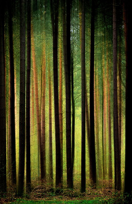 Through The Woods Print by Svetlana Sewell
