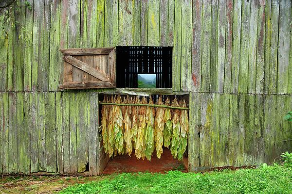 Tobacco Barn Print by Ron Morecraft