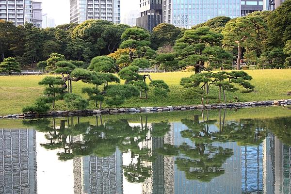 Tokyo Trees Reflection Print by Carol Groenen