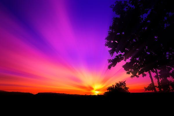 Pin sfondi rosso viola arancione sfondo nero fiori foto hd for Sfondi hd viola
