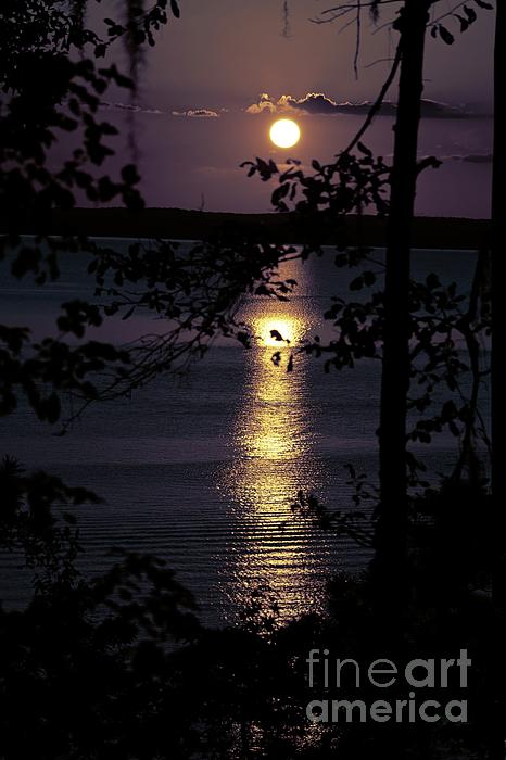 Ella Kaye Dickey - Tranquil Reflection - Sunset #552