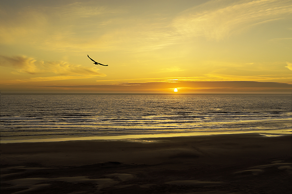 Diane Schuster - Tranquil Skys and High Color A Newport Oregon Sunset