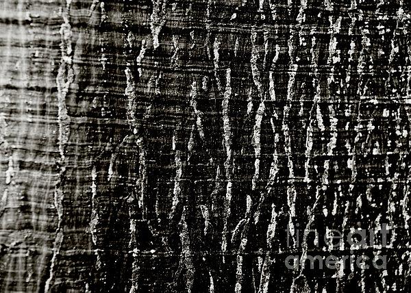 Tree Bark Print by Charmian Vistaunet