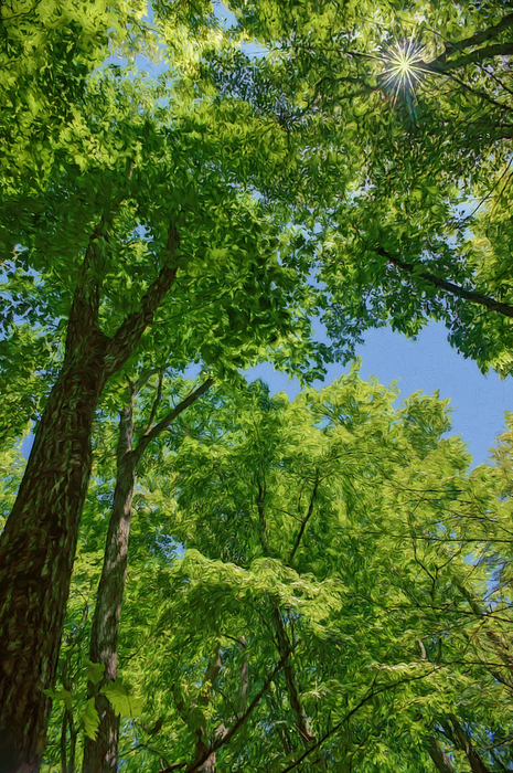 upper canopy tree cover in cocoa Canopy rainforests have a canopy, which is the layer of branches and leaves formed by closely spaced rainforest trees rain forest information for school kids rainforest kidswhat is a rainforest.