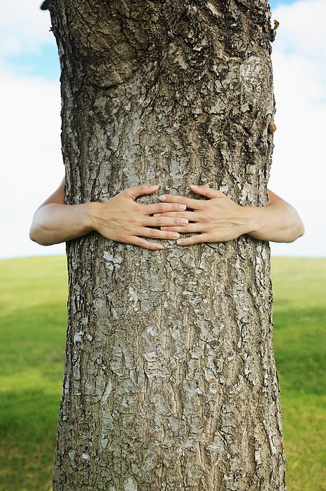 Tree Hugger 1 Print by Brandon Tabiolo - Printscapes