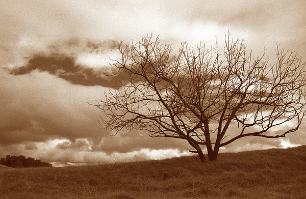 Tree In Storm Print by Kathy Yates