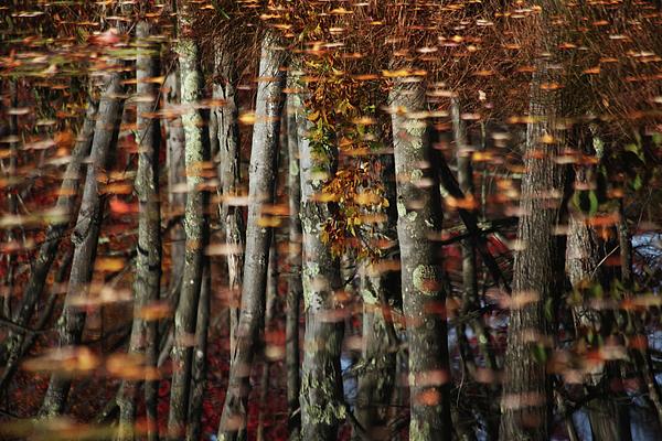 Tree  Reflect Print by Karol  Livote