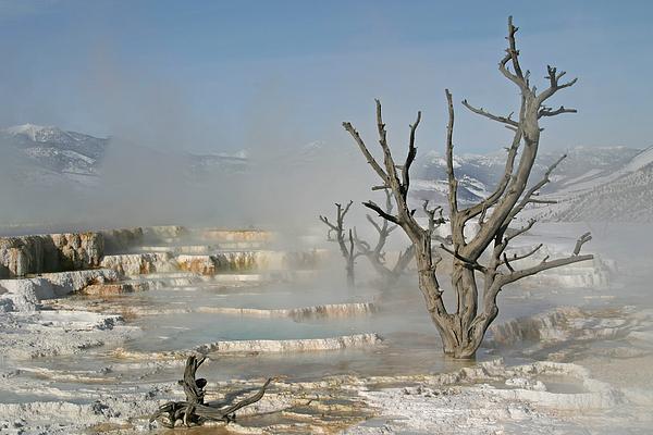 Tree Skeletons In The Mist Print by Katie LaSalle-Lowery