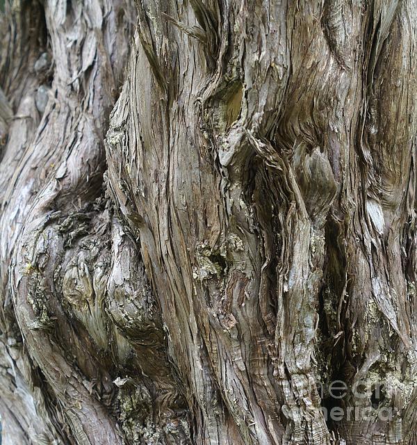 Challito R U - Tree Texture