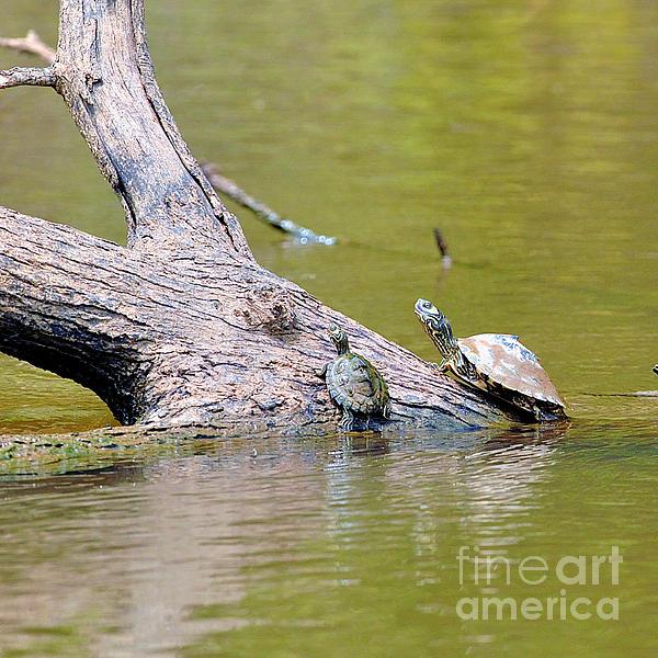 Two turtles on log by winston hudson for Hudson log