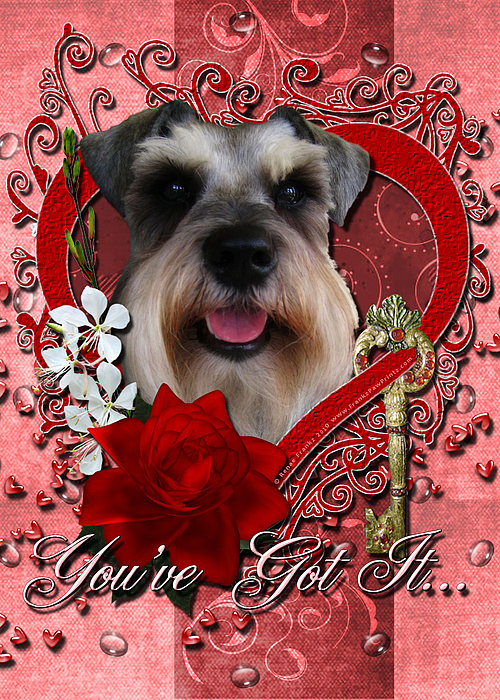 Valentines - Key To My Heart Schnauzer Print by Renae Laughner