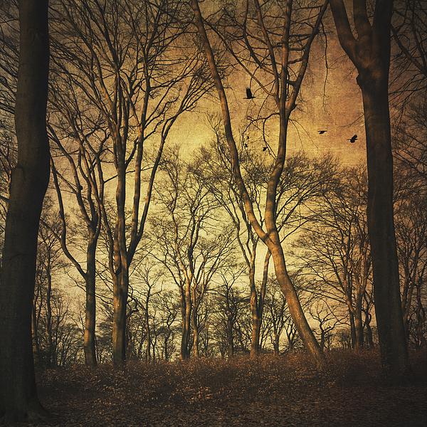 Vintage Forest by Dirk Wuestenhagen