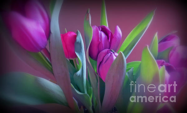 Kay Novy - Violet Colored Tulips