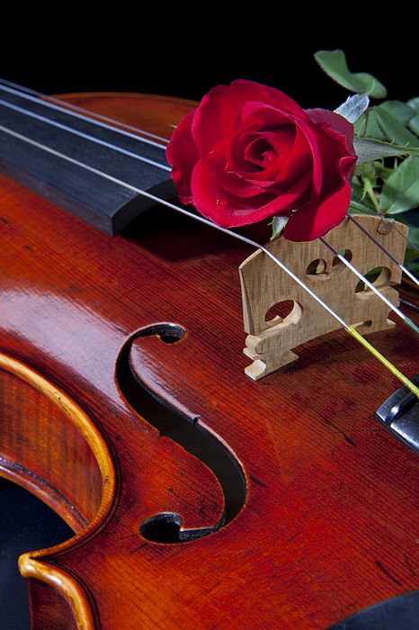Violin And Red Rose Print by M K  Miller