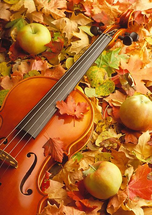 http://images.fineartamerica.com/images/artworkimages/medium/1/violin-with-fallen-leaves-utah-images.jpg